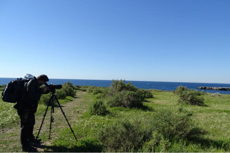 Birdwatching en Tabarca (turismo ornitológico en Comunitat Valenciana)