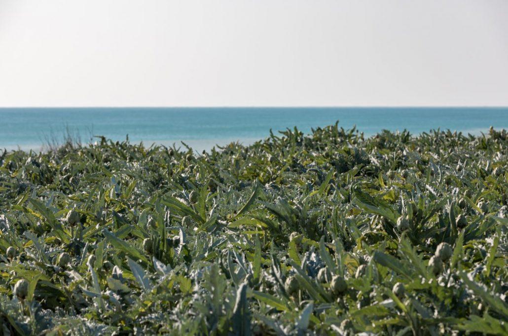 Alcachofas y mar en la Comunitat Valenciana