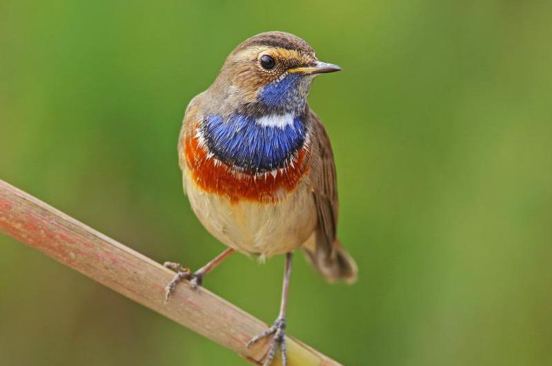 Curso de Turismo Ornitológico