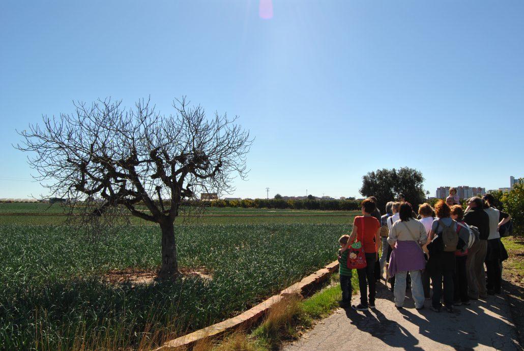 Visitas horta de València. Figuera Bordissot. Activitat Horta Viva
