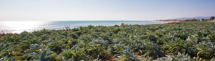 Campo alcachofas vistas mar 1500x430