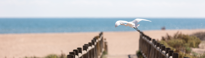 Un ave alza el vuelo en la playa de Xeraco, Comunitat Valenciana